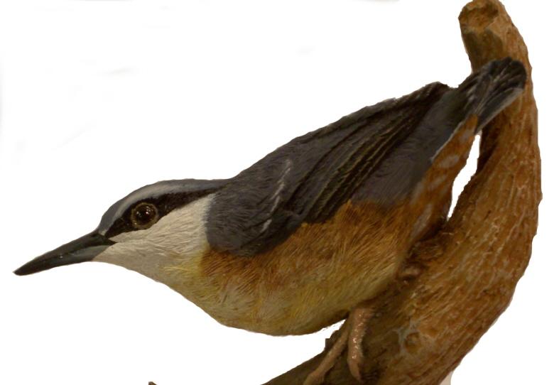 neuntöter vogel des jahres