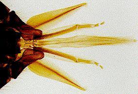 Mikroskopische praeparate